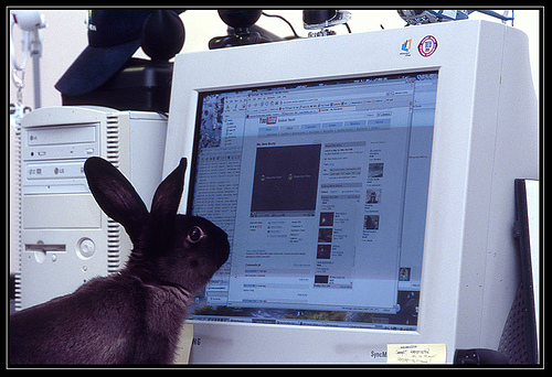 кролик в интернете